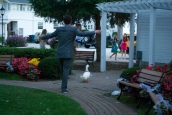 Just a normal site at every wedding where the the bride and groom wrangle ducks for the car ride home